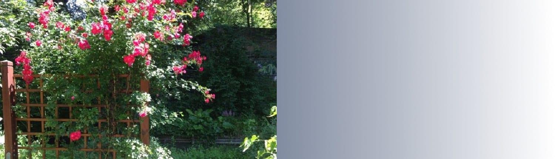 Gärtnerei Slider, Blumen, Busch, Pflanze, Grün